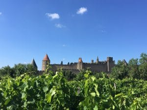 vignoble wineyard carcassonne