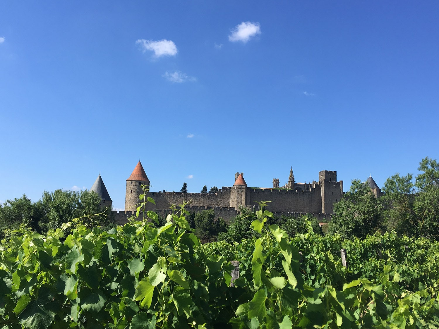 vignoble wineyard carcassonne