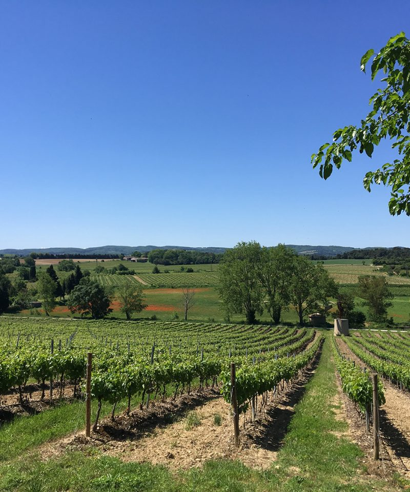 Limoux wineyard limoux vignoble