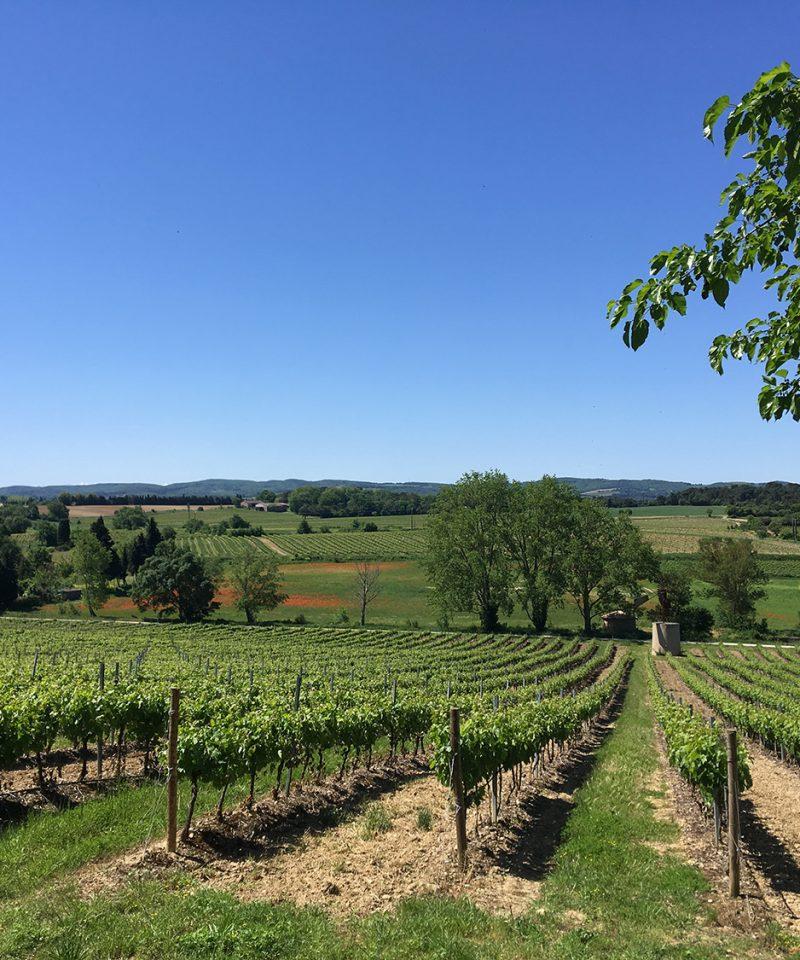 Limoux wineyard limoux vignoble